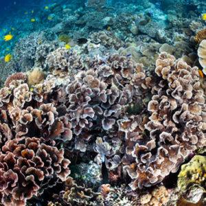 Scuba Diving Mactan