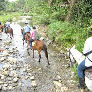 horseback-feeldeeper